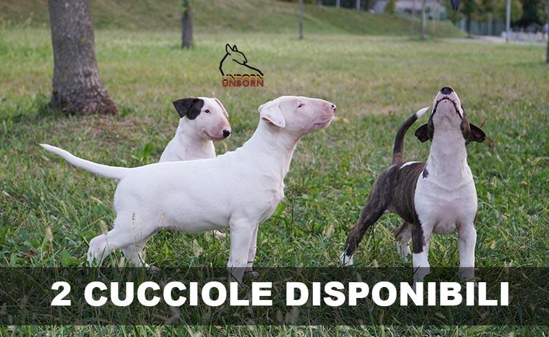 Unborn Roquepine